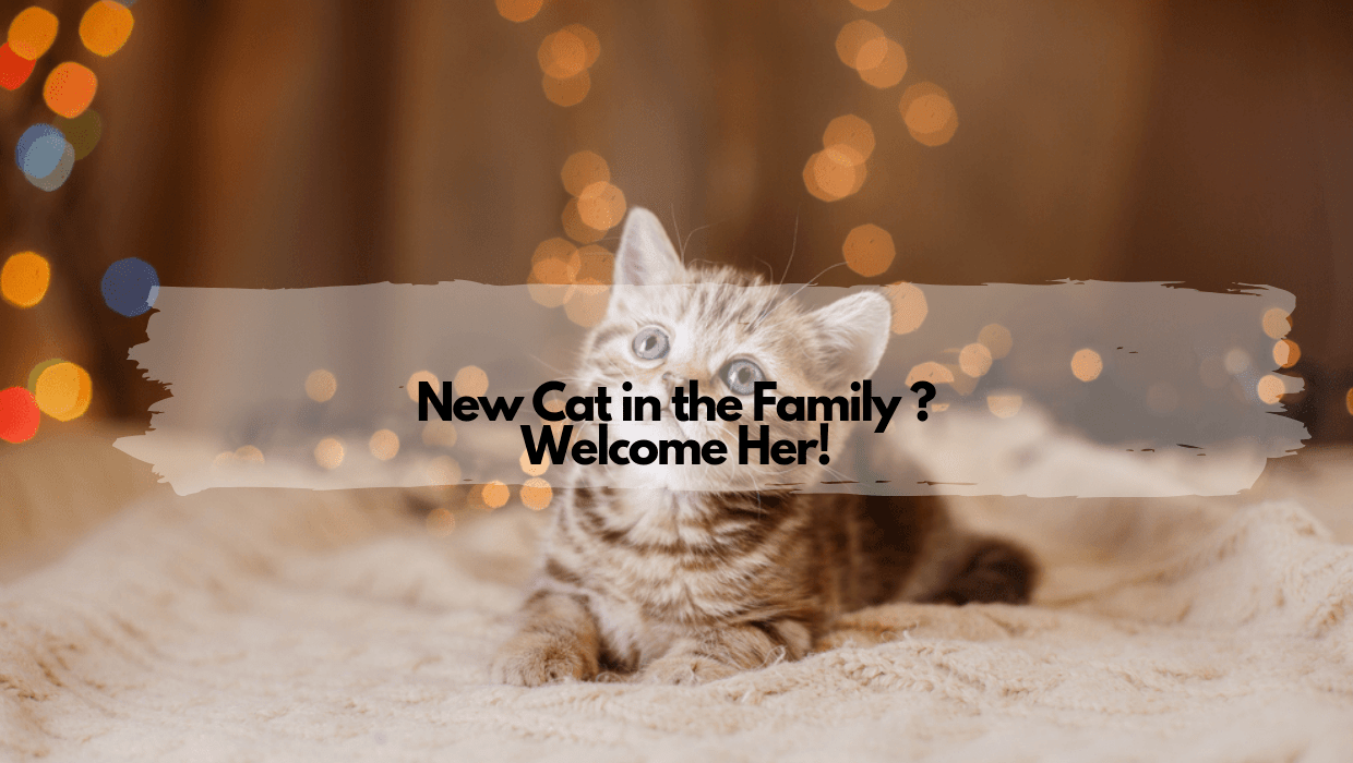 New Cat in the Family Welcome Her
