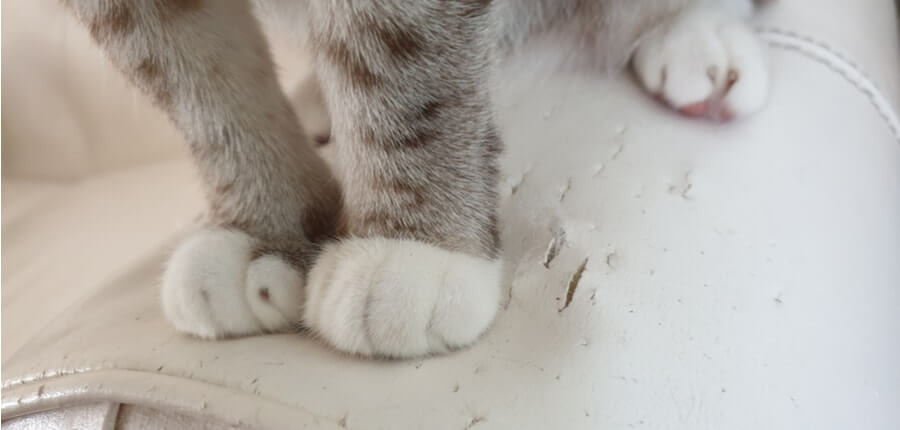 cat normal and abnormal scratching behavior