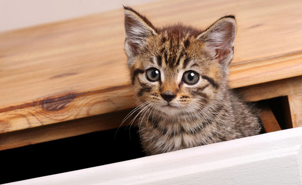 10-Easy-Ways-to-Kitten-Proof-Your-Home