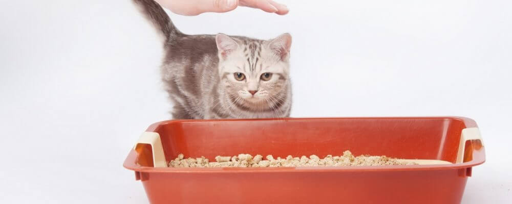 How To Train A Cat To Use A Litter Box properly