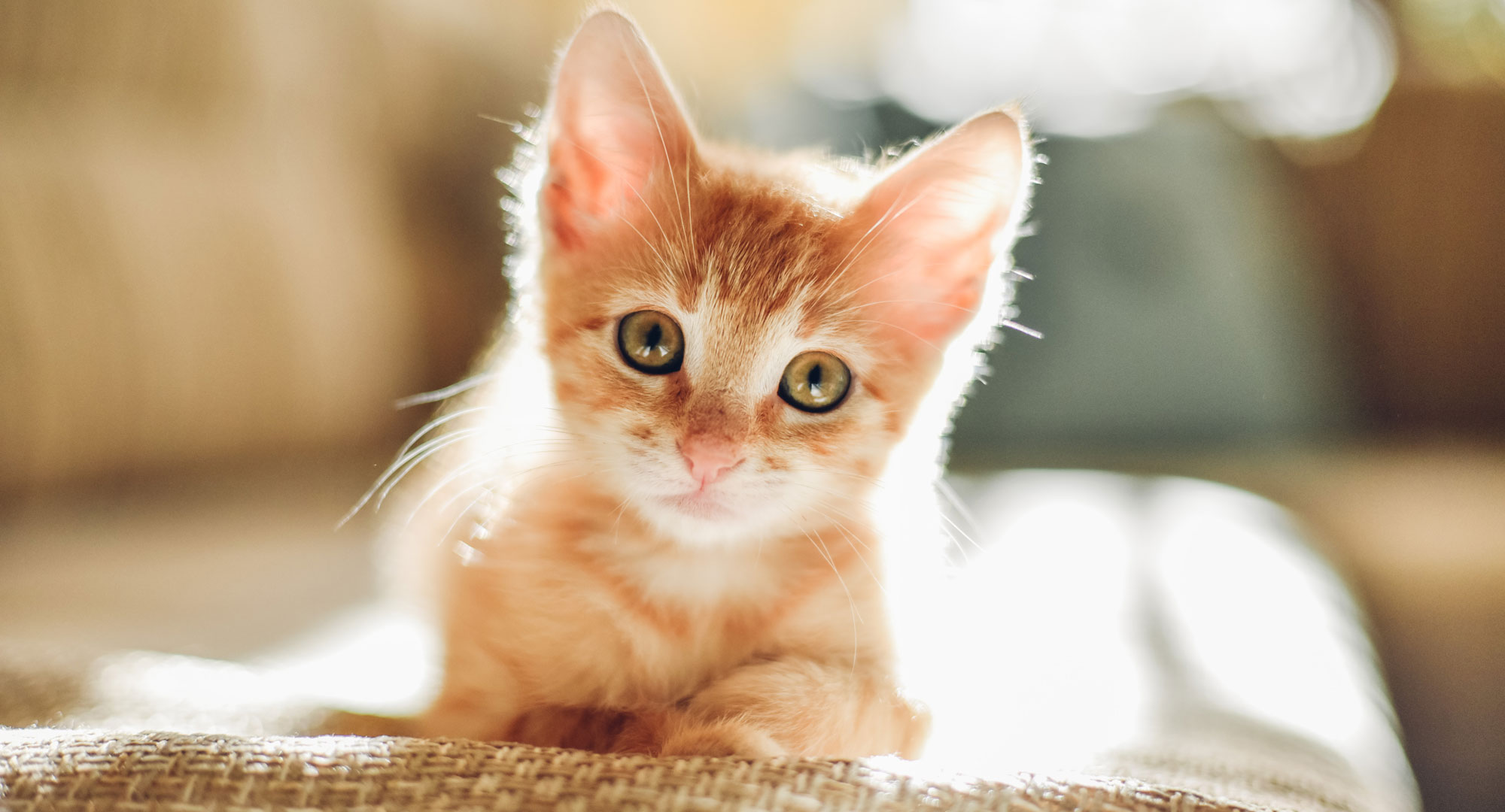 How to Kitten-proof Your Home the Right Way