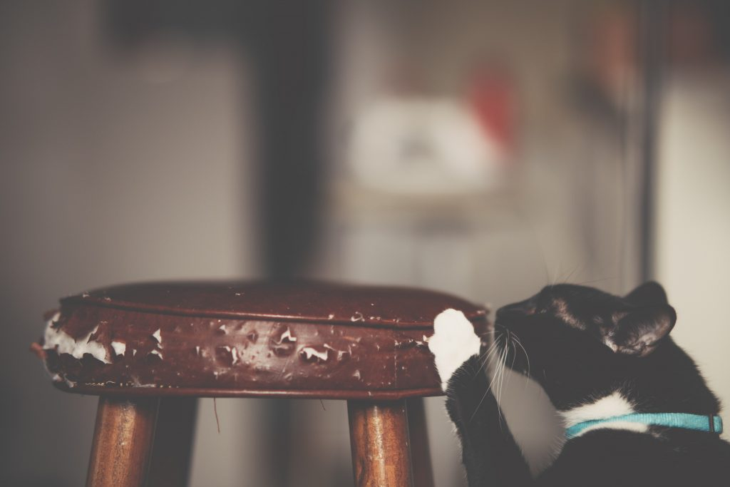 How To Stop Cats From Scratching Furniture?