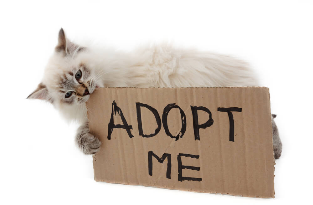 facts about adopting cat