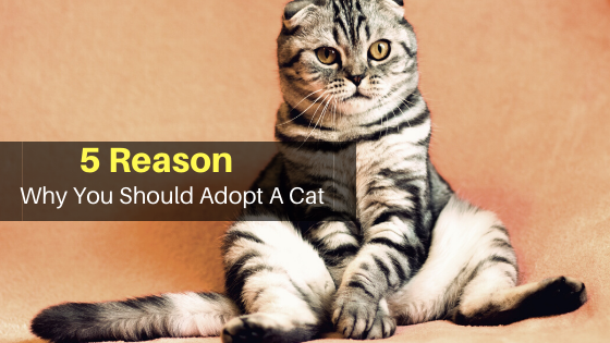 Why You Should Adopt A Cat? [5 Pet Adopting Facts You Must Know]