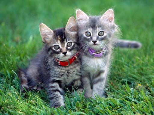 kitten adopting reason