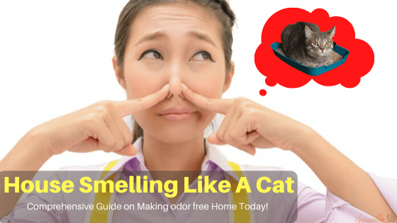 How Do I Keep My House From Smelling Like A Cat?