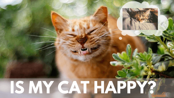 Learn ways to know if your Cat is Happy