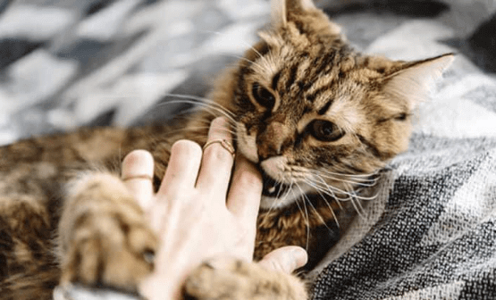 Why Do Cats Love Bite