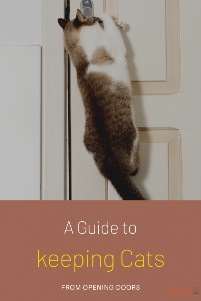 How To Keep Cats From Opening Doors?