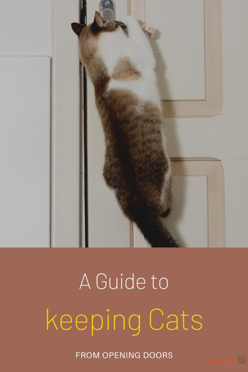 keeping cats from opening door