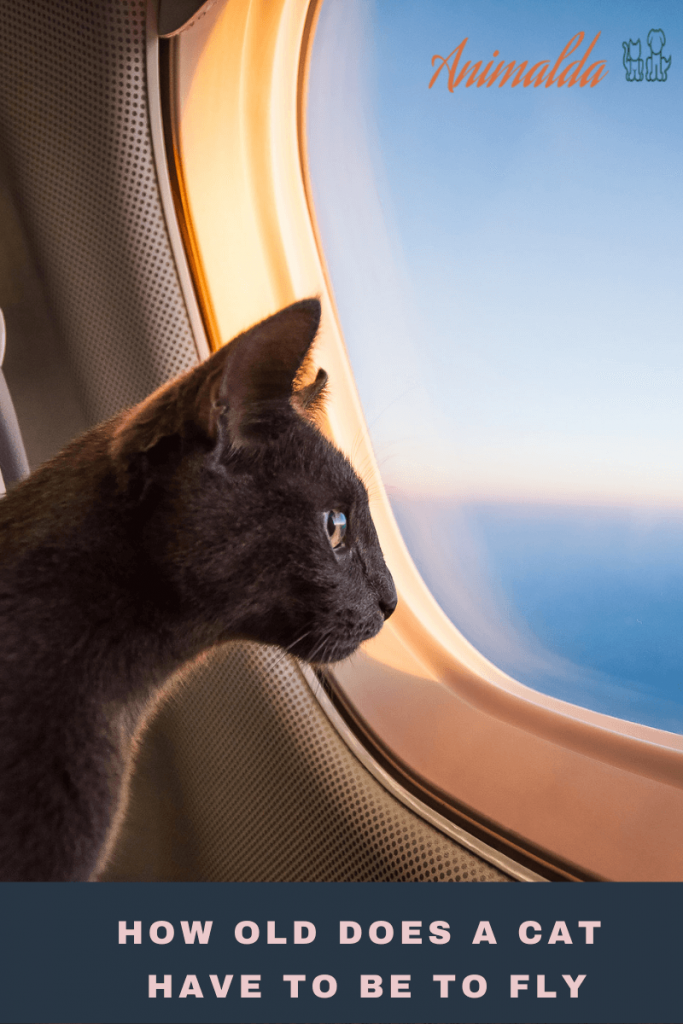 How Old Does A Cat Have To Be To Fly?