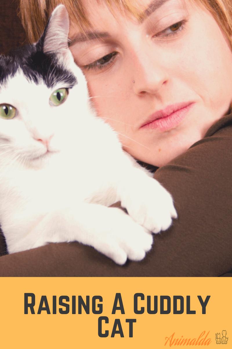 raise a cuddly cat by animalda.com
