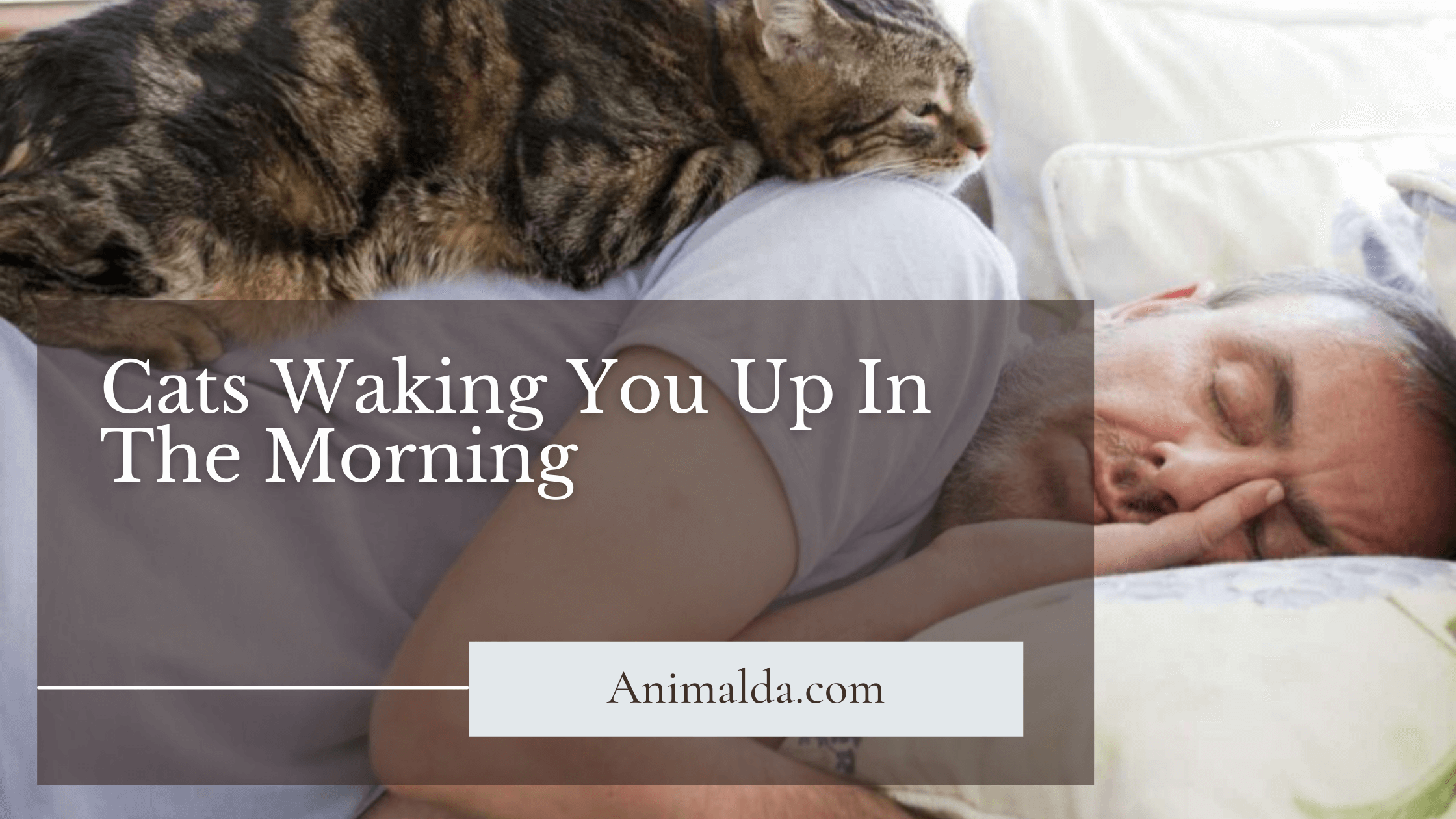 Cats_Waking_You_Up_In_The_Morning